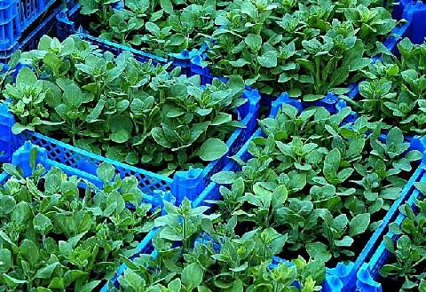 GardenZone_PlantProduction